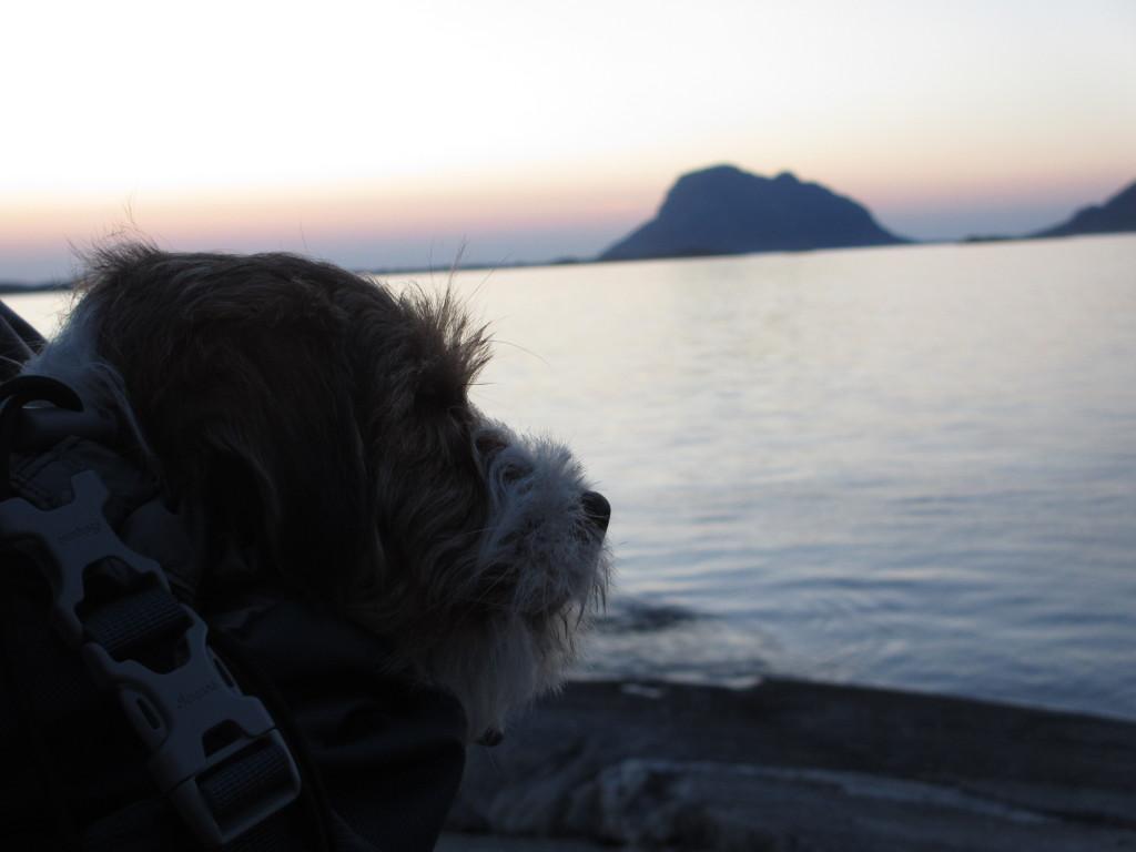 Hund nyter utsikten. Foto: TB