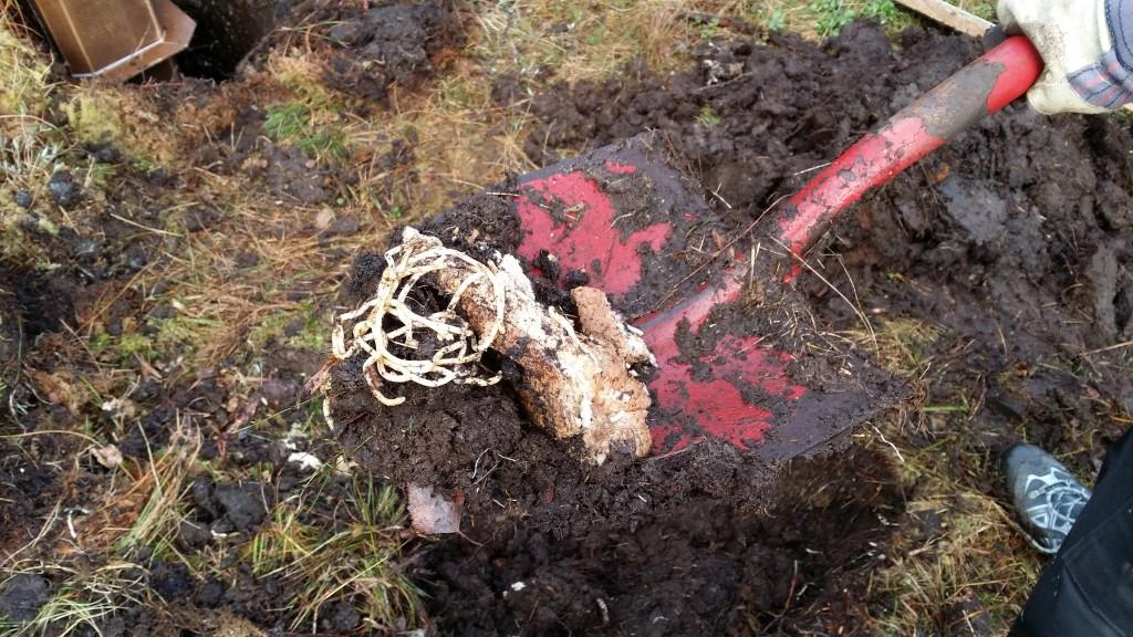 Gravingen resulterte i gangst av spaghetti og pølsebrød.  Det holder seg godt i myra. :-)
