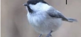Fuglekassesafari